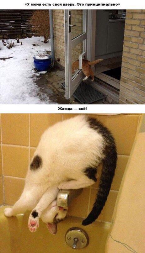 Дверь не дверь - когда ты кот. Не дай себе засохнуть.