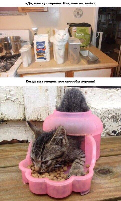 Коты - жидкость. Коты любят покушать