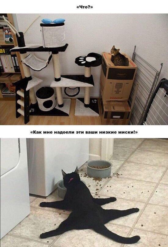 Коробка - лучшее решение проблем с жильём. Особенно если ты кот и пластичный кот