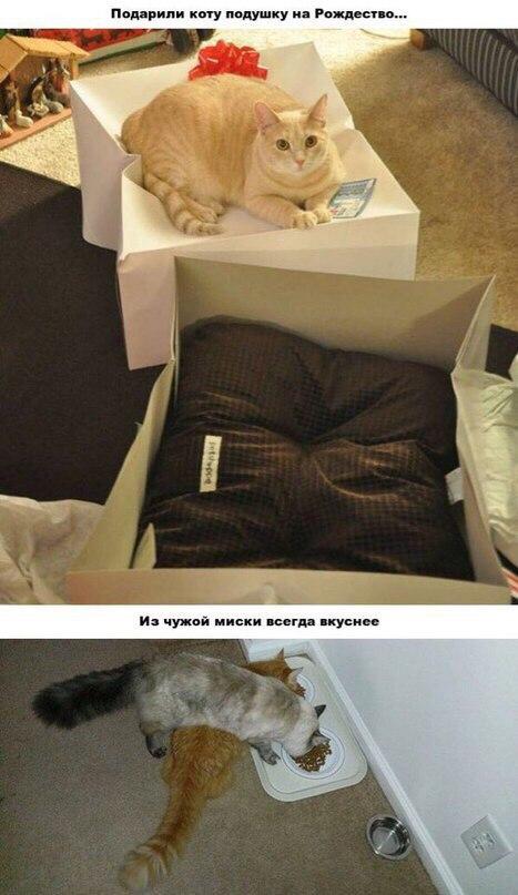 Хорошая упаковка - лучше самого подарка. Ещё и пожрать из чужой миски
