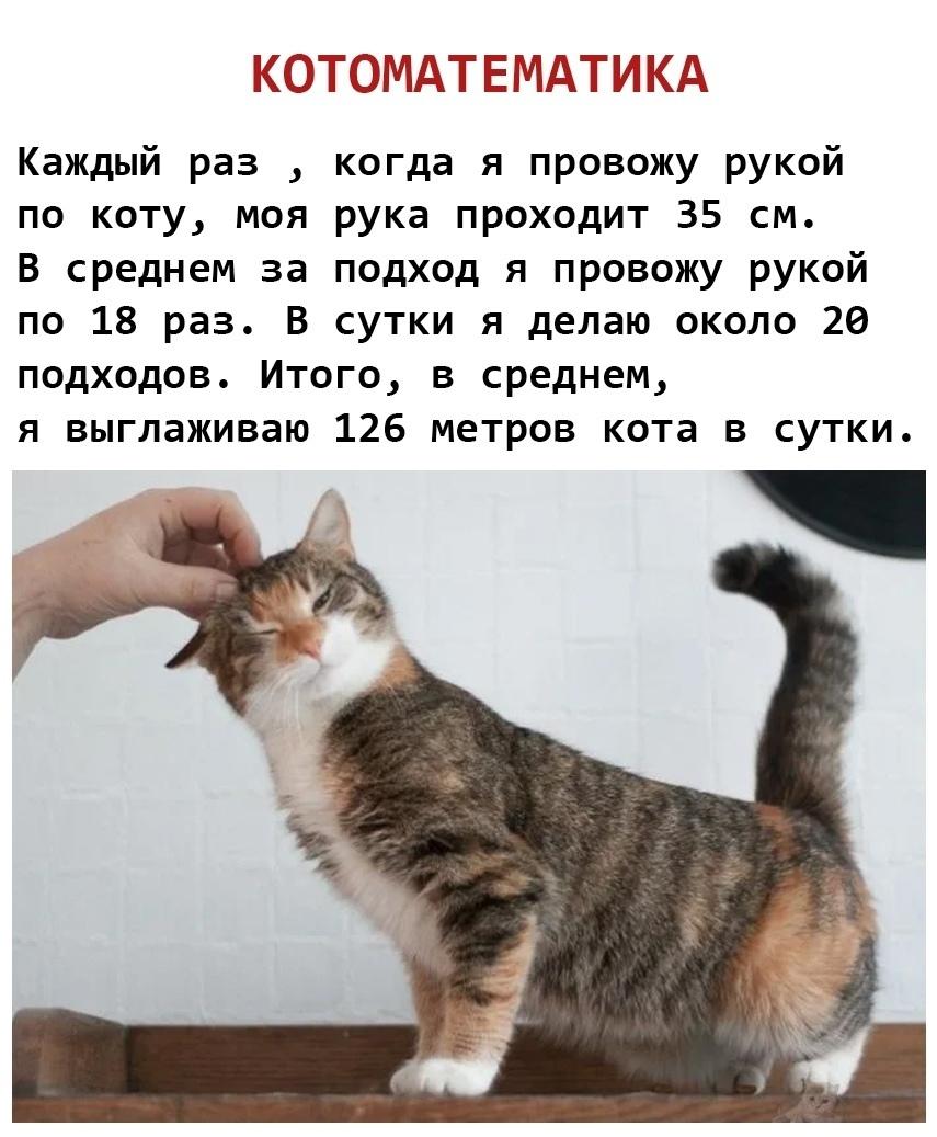 Котоматематика котизм кот идиот - хозяин дурак