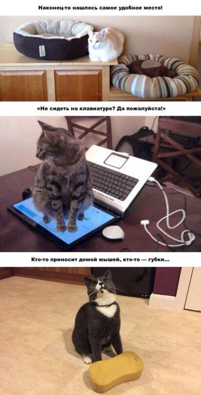 Кот законнектился в муртернет, задушил губку боба и присел отдохнуть в нужном месте