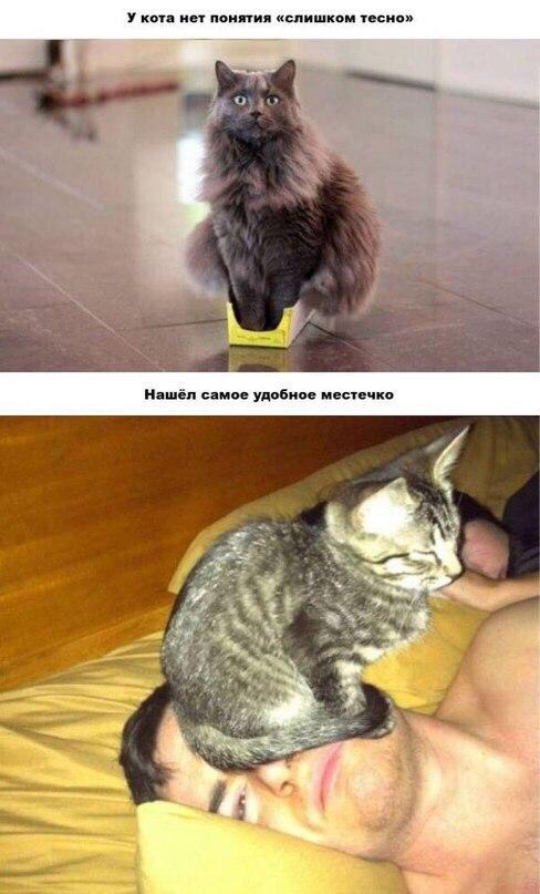 Порно: Киской на лицо. Котёнка в коробчёнке независимо от размера.